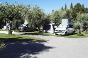 Olivenbäume auf dem Campingplatz